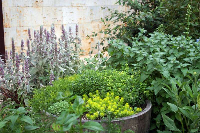 Un jardín para los sentidos