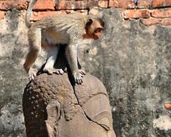 Buddha with Monkey