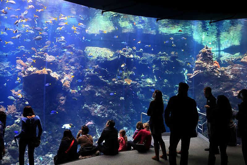 golden gate aquarium