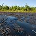 """La """"Amazonía Tóxica"""" en Ecuador"""
