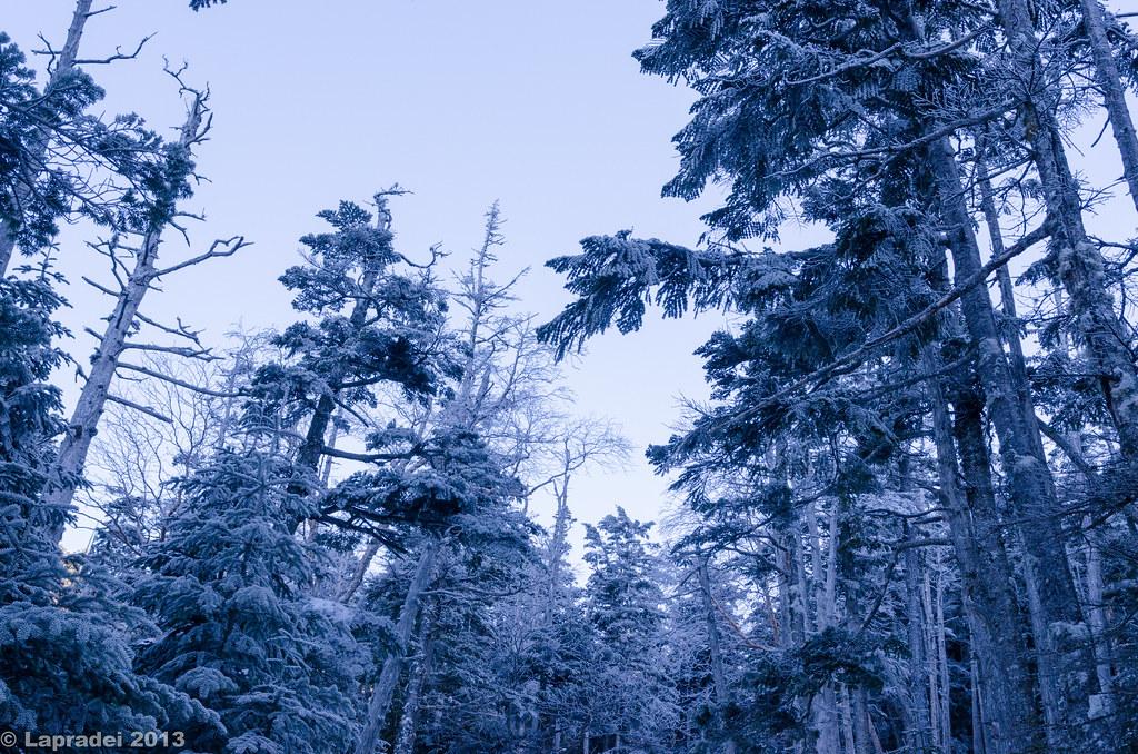20130203 霧氷の森