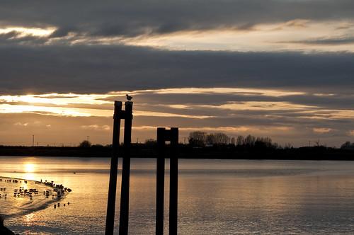 Westham Island by petetaylor