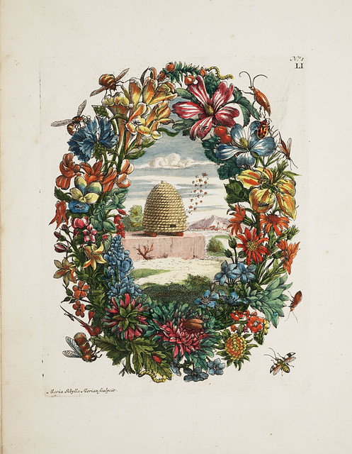 Maria Sibylla Merian, Flower wreath and bee hive, 1730