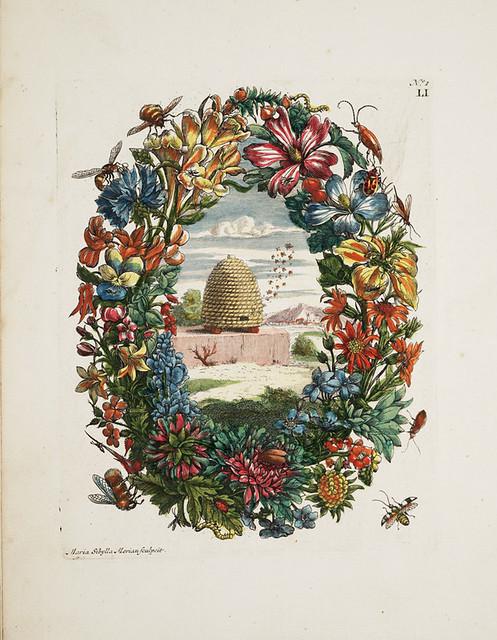 Maria Sibylla Merian, Flower wreath and bee hive, 1730