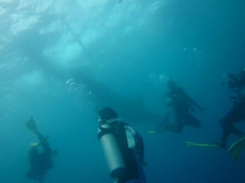 動物何價~宿霧篇:鯨鯊03