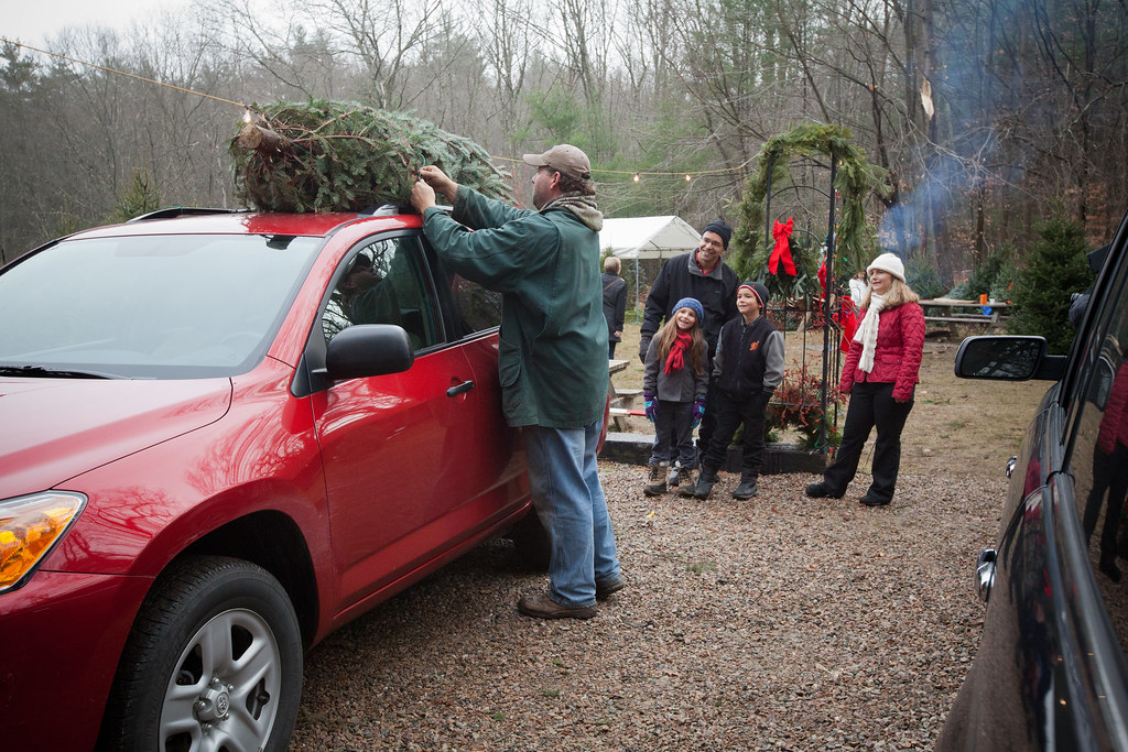 Christmas Tree Farm, Deerfield