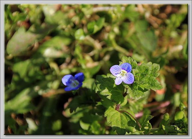 7 Flores