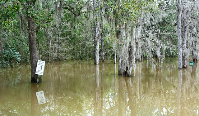 Chipola River at Flood Stage