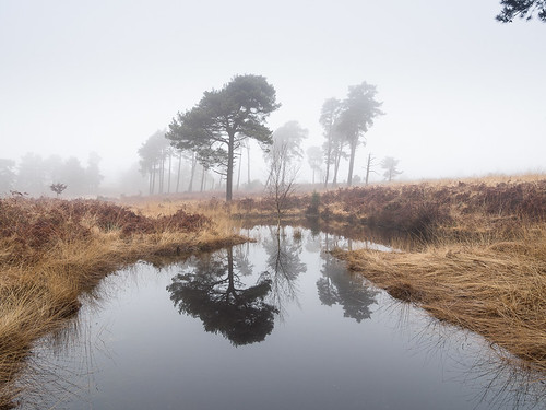 england sussex ashdownforest