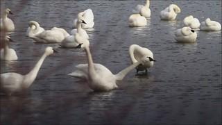 Tundra Swan Jazz Quartet