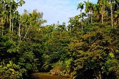 復育有成的天然次生林:層次分明