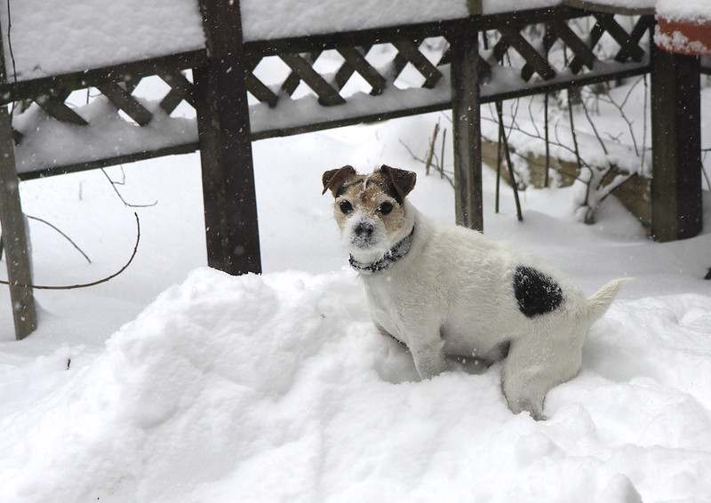 doggie in the snow2