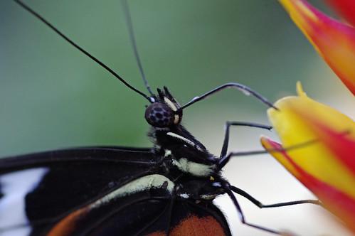 vlinder6