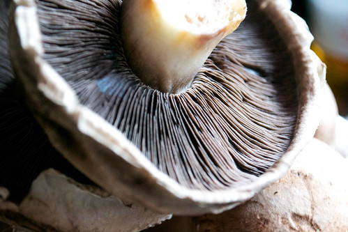 close up flat mushroom