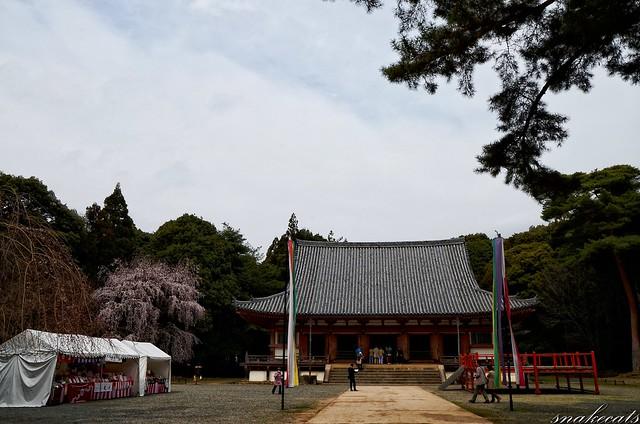 「春の伽藍」 醍醐寺 - 京都