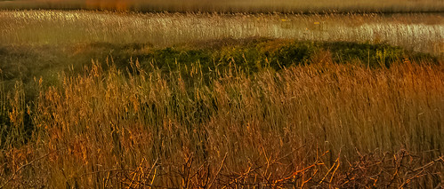 sunset england bird reed nikon beds hampshire land marsh geoffrey radcliffe sanctuary hillhead d700 lightroom5