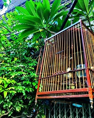 #caged #bird #bangkok #urbanhike