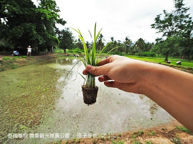 泰國華欣 農業觀光推廣公園 29