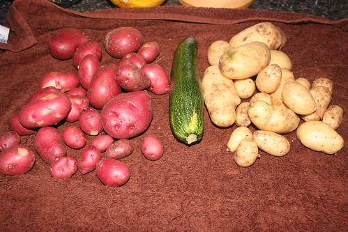 7 July Trisha's Garden Potatoes (2)