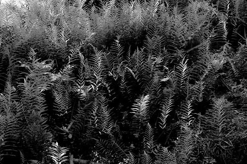 lavega uploaded:by=flickrmobile flickriosapp:filter=nofilter