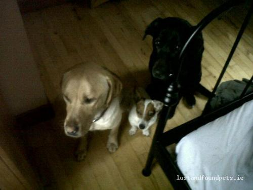 Sat, Jan 5th, 2013 Lost Male Dog - Clough, Gurteen, Galway