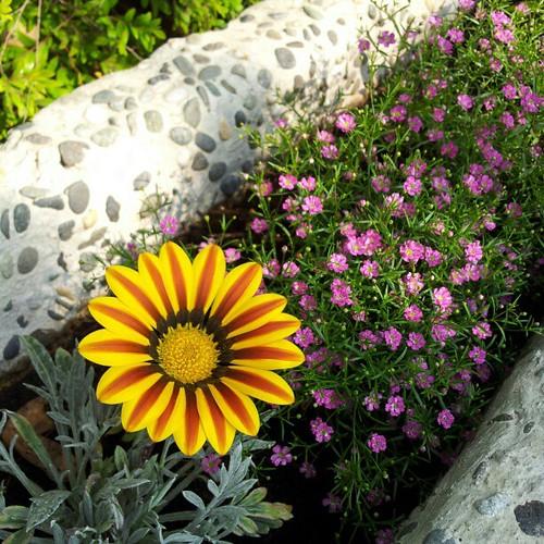 20130119 一度以為這朵是假花。