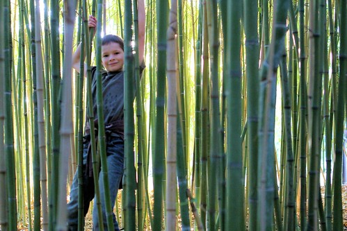 Silas in the bamboo_5332