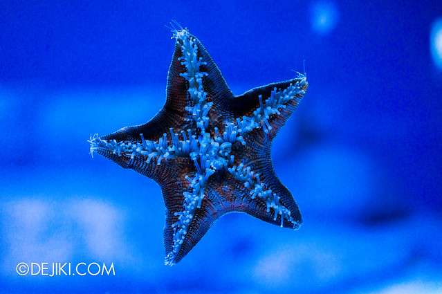 S.E.A. Aquarium - Star in blue