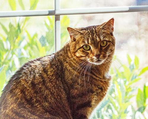 Cat in the Window!