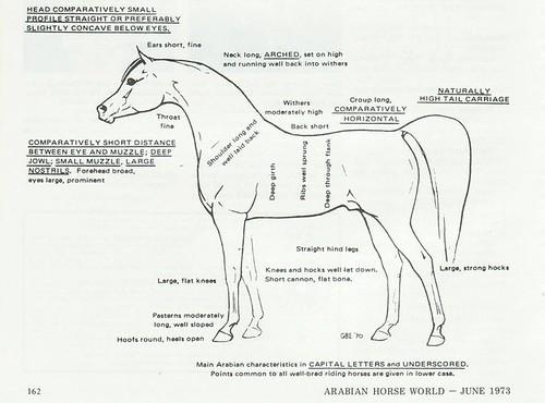 Arab characteristics by trudeau