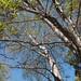 Garden Inventory: Ash Tree - 16