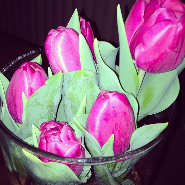 My tulips from my Valentine are blooming! So loving that he got me tulip bulbs. It's the gift that keeps on growing!