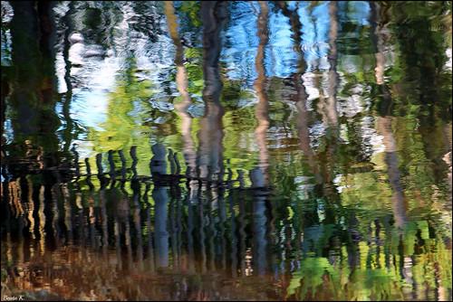 blue trees brown reflection green nature water fence reflections pond colorful florida ripples waterreflection waterreflections orlandoflorida naturesart pondreflection waterripples pondreflections animalkingdomdisneyworld