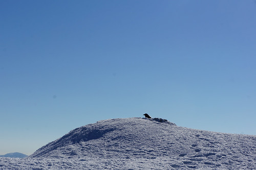 A Raven on the summit of Beinn nan Eachan