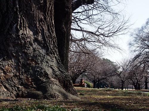 Shinjuku Imperial Garden 2