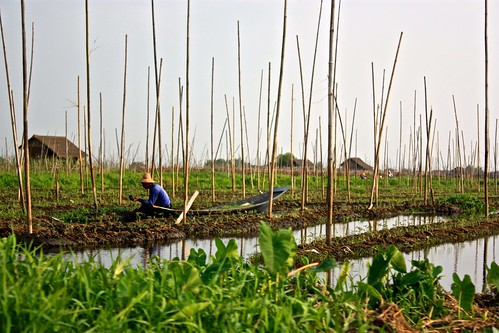 a local famer picking from the floating garden