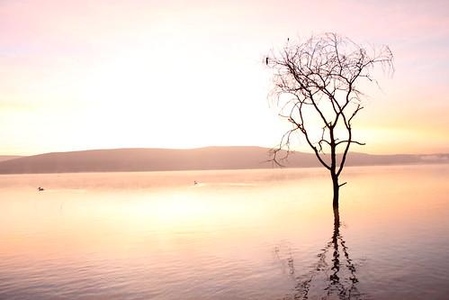 morning light sun lake nakuru lakenakuru