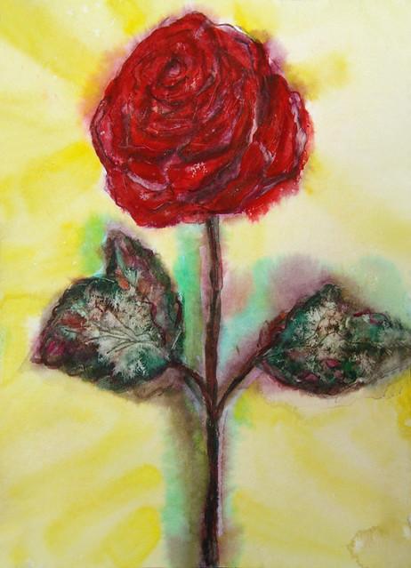 Роза 11.03.13