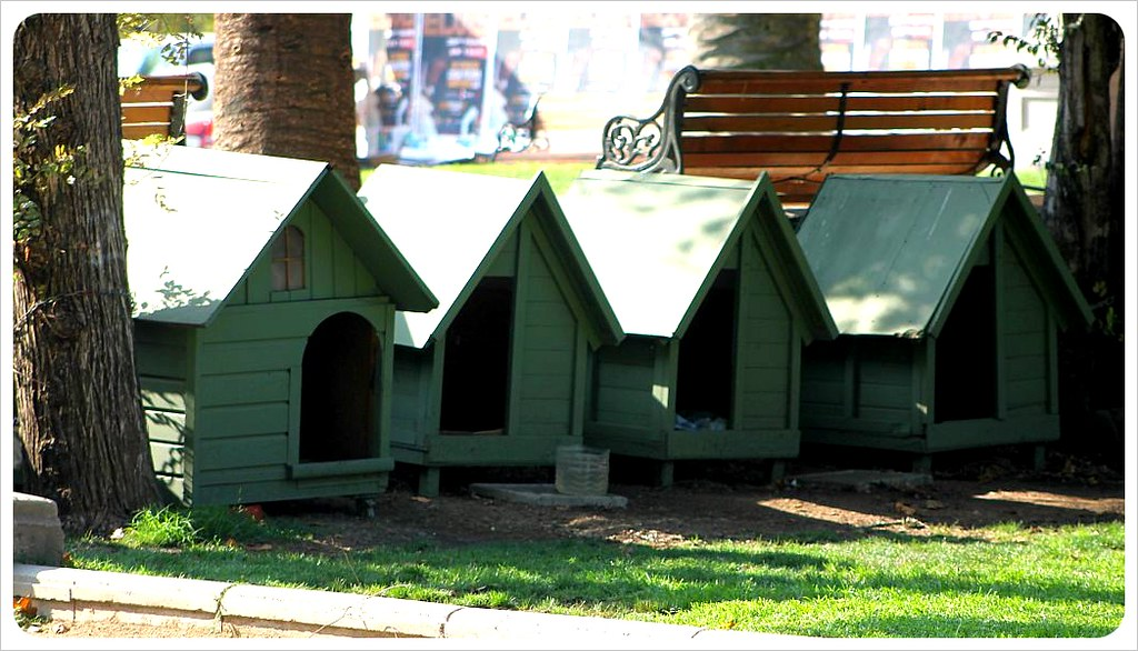 santiago dog houses