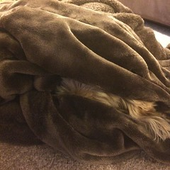 After sporadically barking for the last two hours, Ginger finally found a way to hide from the delivery guy. #sillydog, #dogsofinstagram, #spoileddog