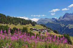 Val d'Ayas 2016