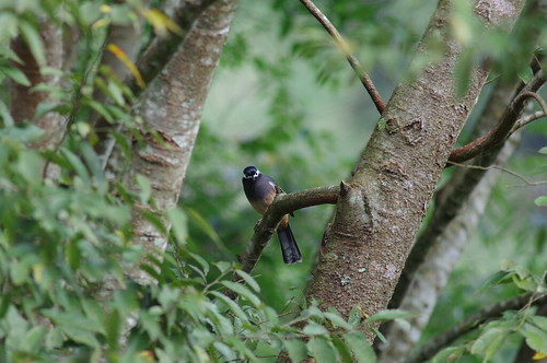 拍鳥接力   (塔塔加)