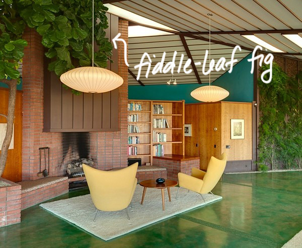 Mid-century Modern House Plants