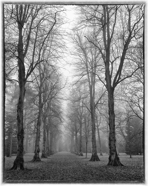Misty Lime Avenue