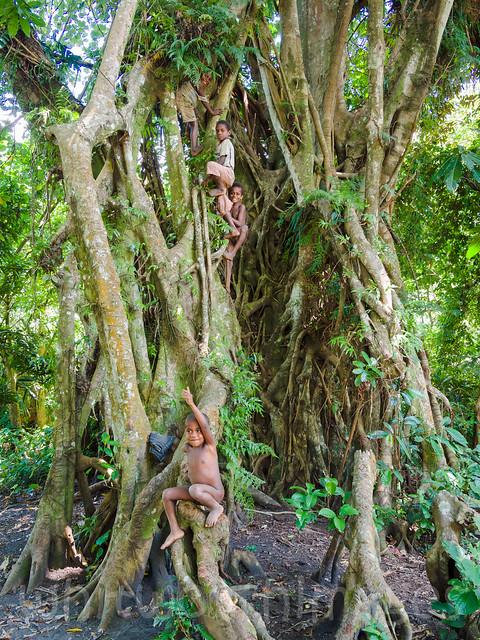 Climbing the banyan  Flickr - Photo Sharing!