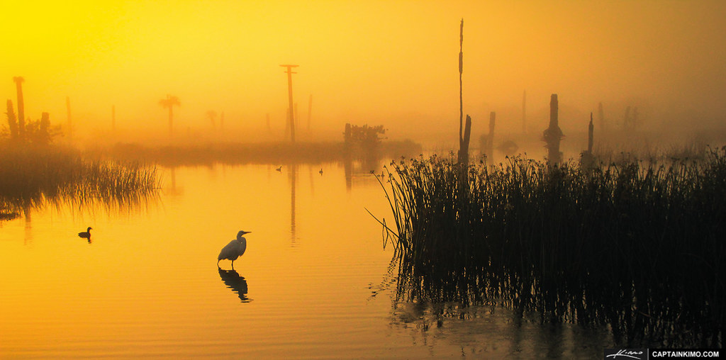 White-Heron-During-Foggy-Morning-Sunrise-at-Viera-Wetlands