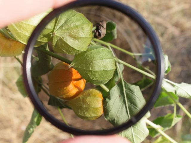 View-through-Circular-Polarizing-Filter__IMG_1294