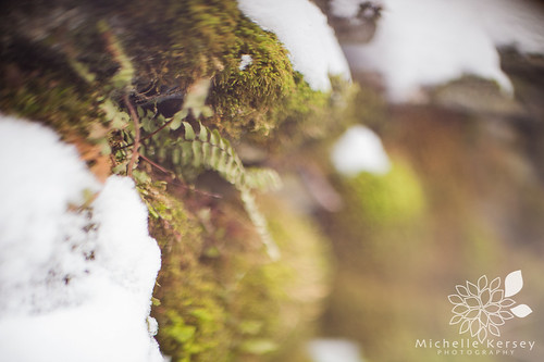 Freelensing rock wall with fern
