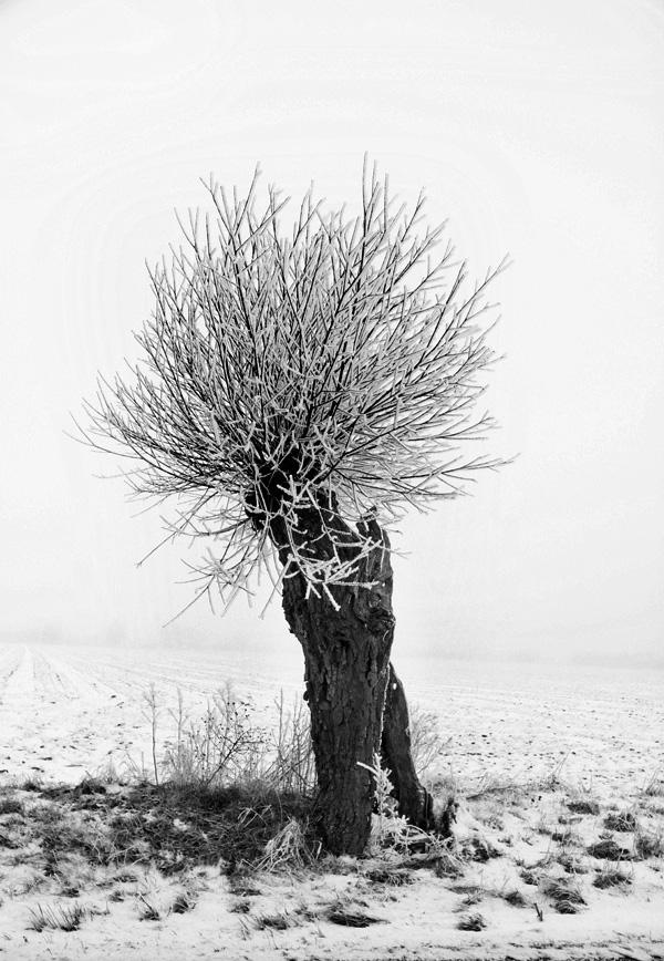 Vinterdag-6
