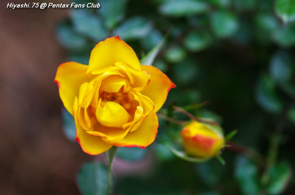 難得的冬日,暖和的午後,出門拈花惹草 Part 2